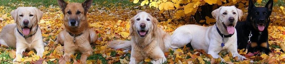 2017-09 Honden in de herfst