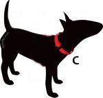 AnimalWebshop.com bepaald de halsbandmaat van uw hond
