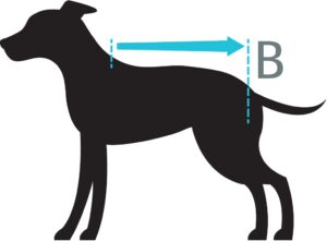 Operatie body vest petlando vetlando Hondenpenning.net HETDIER.nl AnimalWebshop