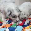 Snuffelmat 32x40 cm Petlando voor de hond Hondenpenning.net HETDIER.nl Animalwebshop